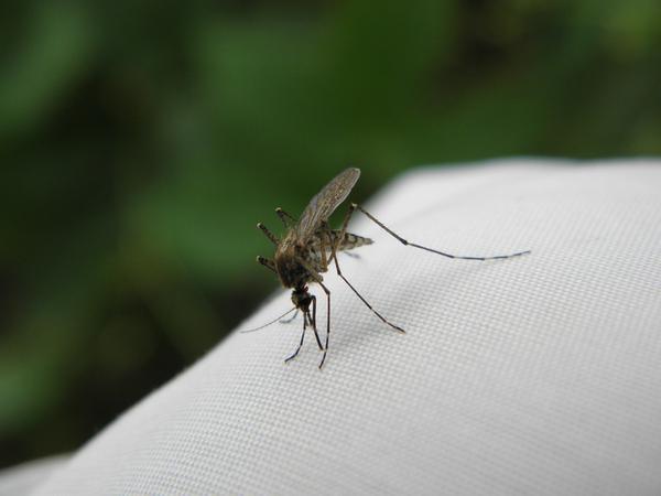 lampa owadobójcza na zewnątrz