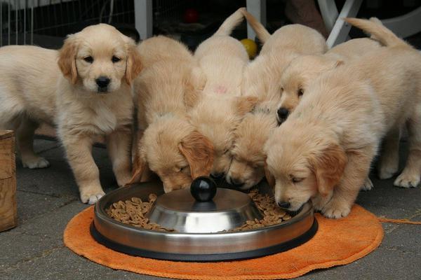 karmy dla psa producent